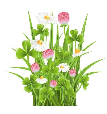 Prato verde con fiori di trifoglio e camomilla Archivio Fotografico - 12928317