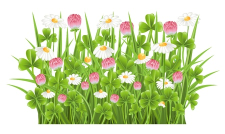 fourleafed: Green grass with clover and camomile flowers