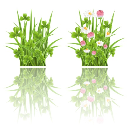 Green grass with clover and camomile flowers Stock Vector - 12928301