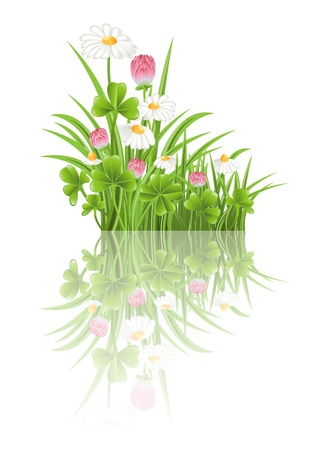 Green grass with clover and camomile flowers Vector