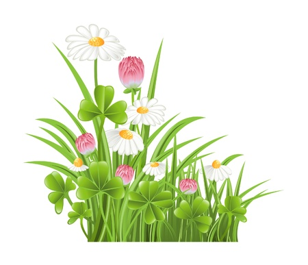 Green grass with clover and camomile flowers Stock Vector - 13326022