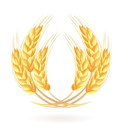 Wheat ears Stock Vector - 14008482