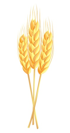 Wheat ears Illustration