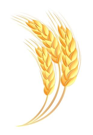 köylü: Buğday kulaklar simgesi Çizim
