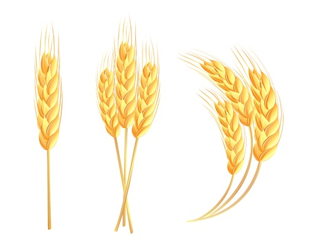 flour mill: Wheat ears Illustration