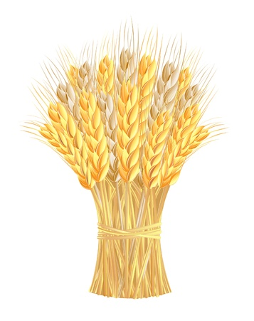 wheat illustration: Sheaf of wheat ears