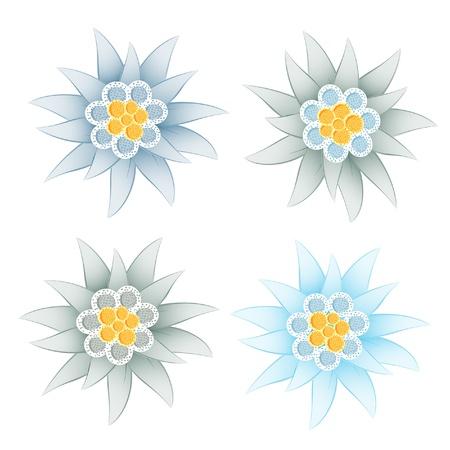 Edelweiss (Leontopodium alpinum) Ilustracja