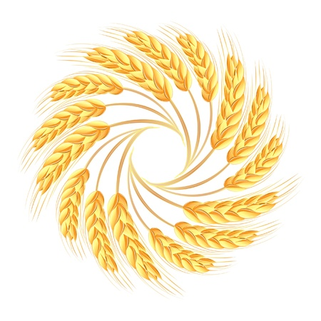 whole grain: Wheat ears icon Illustration