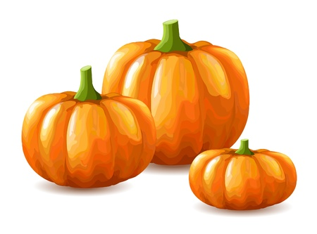 Bunch of pumpkins on white background Vector