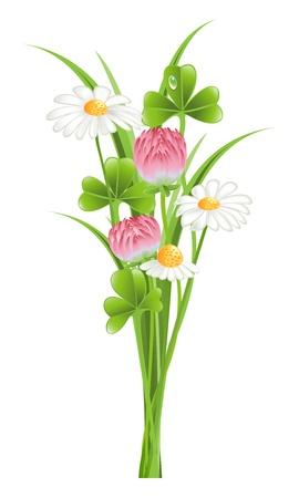 four leafed clover: Manojo de flores de tr�bol y manzanilla