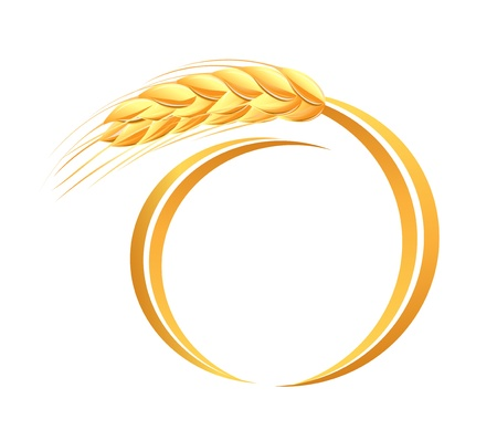 cereal plant: Wheat ears icon Illustration