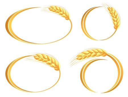 Conjunto de iconos de trigo oídos