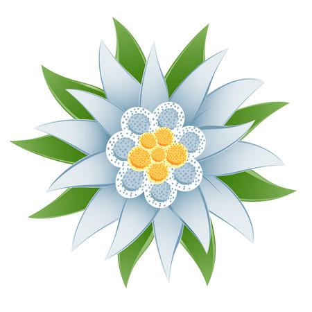 에델바이스 (Leontopodium alpinum 델) 꽃