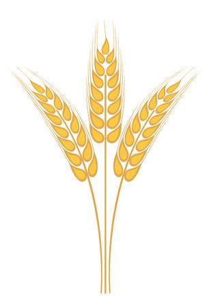 caryopsis: Wheat ear