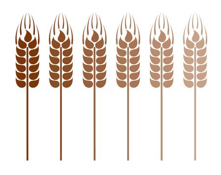 ear of corn: Wheat ears Illustration