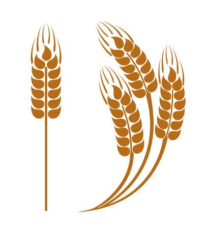 Wheat ears icon Vector