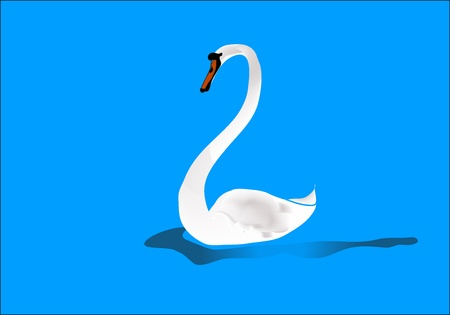 The swan silently floats in quiet water   Stock Vector - 18273916