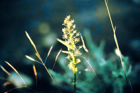 grassy: Grassy background  Stock Photo