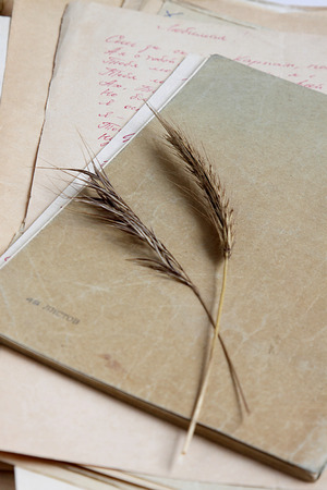 poems: Old notebook, poems and dry grass.