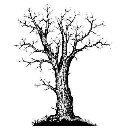 tree hand drawn sketch
