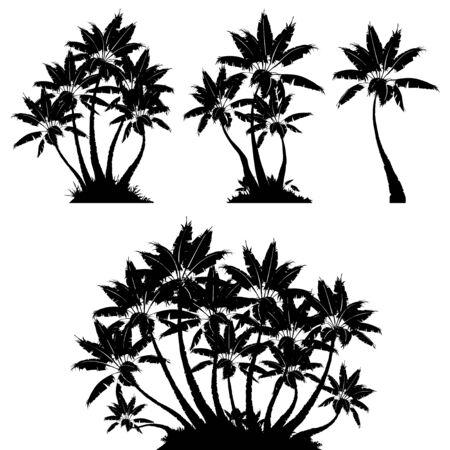 palm tree Ilustracja