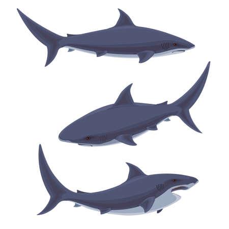 Shark.Underwater cute marine wildlife .illustration of stylized shark.