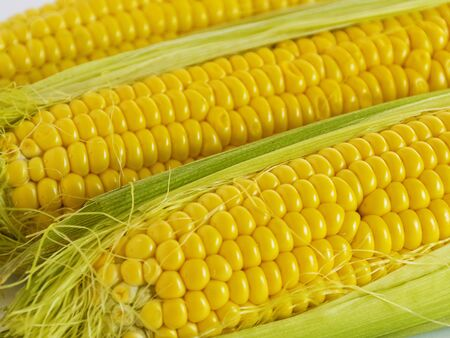Sweet golden corn. Image of a yellow grain of sweet corn on the cob. Dense rows of corn seeds. Фото со стока