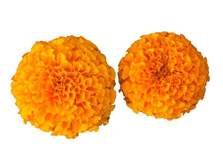 Beautiful yellow flower for the garden. Marigold is orange. Medicinal plant. Decoration alley. Bright and beautiful flower.