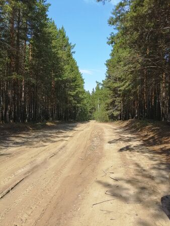The road in the forest. Natural environment. Wild nature. Trail. Stok Fotoğraf - 132122991