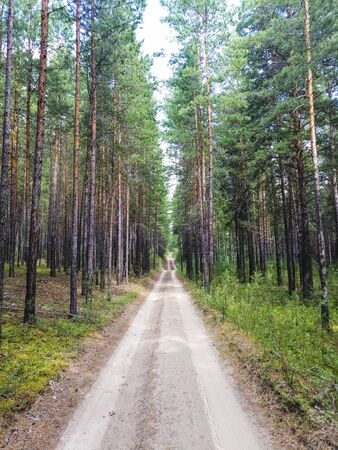 The road in the forest. Natural environment. Wild nature. Trail. Stok Fotoğraf - 132123955