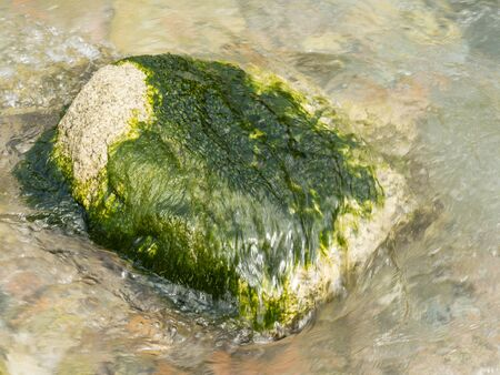Stone in the water covered with moss. Green moss. Beautiful natural texture. Background.