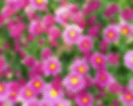 Interesting blurred background of flowers. Colorful background. Blurred Banco de Imagens