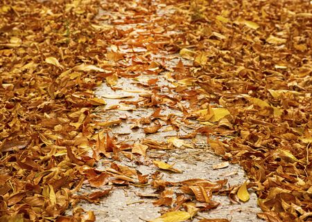 Yellow autumn foliage lies on the path. Autumn cloudy day after the rain. Leaves on the road