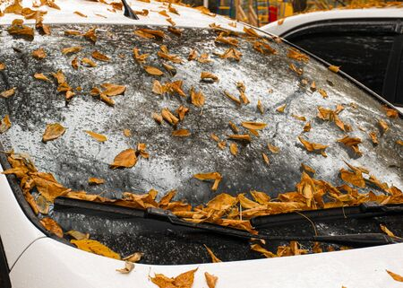 Autumn yellow and orange leaves lie on a car. Windshield in raindrops. Autumn cloudy weather. Reflection in the glass. Banco de Imagens