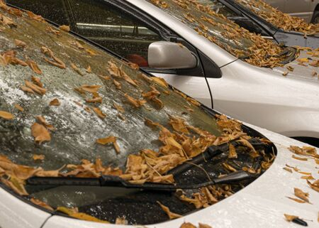 Autumn yellow and orange leaves lie on a car. Windshield in raindrops. Autumn cloudy weather. Reflection in the glass