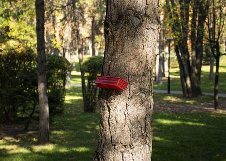 Bird feeder and squirrels in a park in the city. Help animals. DIY feeder.