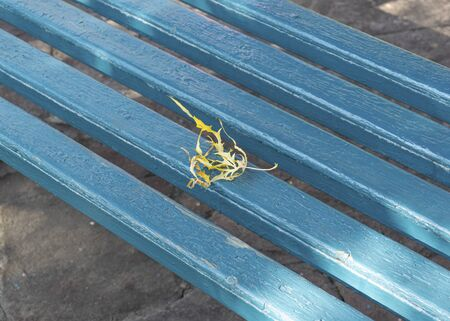 Autumn yellow leaves lie on a  blue wooden park bench. Fall foliage in the city. October