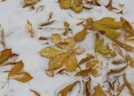 The first snow fell in the fall. Snow lies on green and yellow leaves. Snowfall and winter. Cloudy snowy weather. Banco de Imagens