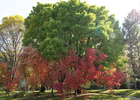 Beautiful autumn landscape. Red and green leaves on a tree. Autumn in the park.