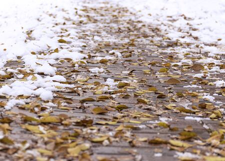 The first snow and yellow leaves lie on the sidewalk in the fall. Cloudy weather after snow. Fall foliage in the fall.