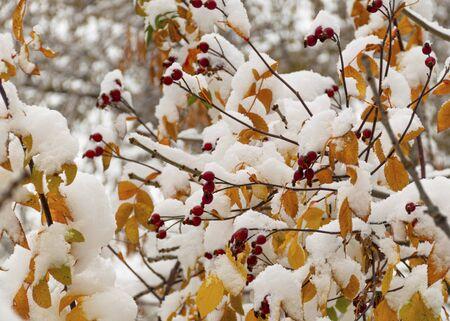 white garden flower. beautiful bush in the garden. Spring