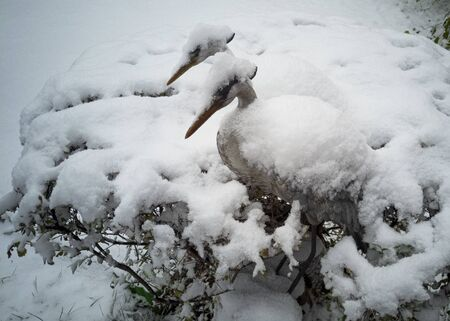 Fluffy white snow lies on the bushes and the figure of a stork. Snowy winter. Frost and cold.