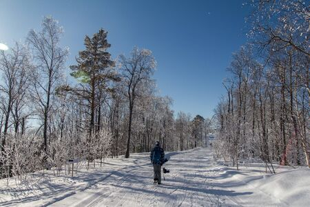 Winter wonderland landscape with snowy coniferous forest. Christmas background. Picturesque gorgeous wintry scene. Mountain winter forest. Snowboarder walking in the woods with a board.