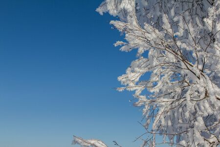 Frozen tree on winter mountains. Snow covered trees. Winter frost forest. Ural landscape.