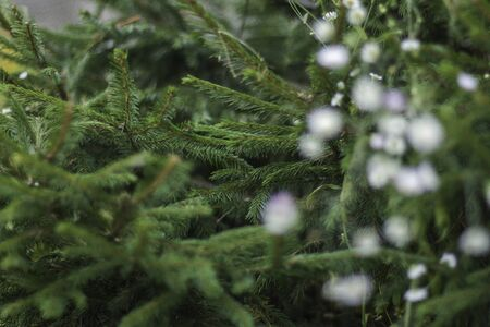 Fir-tree background. Background from green Fir tree branch. Fluffy young branch Fir tree with white little flowers, close up.Christmas new year year background template. Holiday wallpaper concept. Foto de archivo