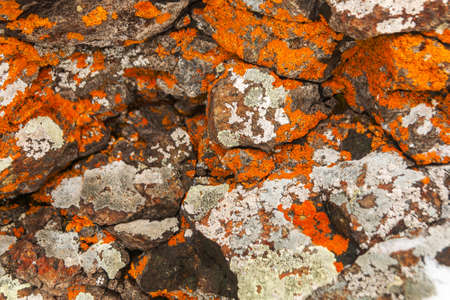 Orange and grey moss on the stones. Close-up detail lichen on the rock. Background nature texture of moss-covered boulder. Reklamní fotografie