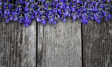 Fresh lavender flowers, on old, gray wooden background