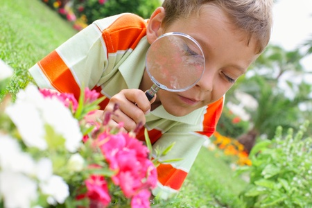 looking through an object: Child, examining with a magnifying glass flower Stock Photo