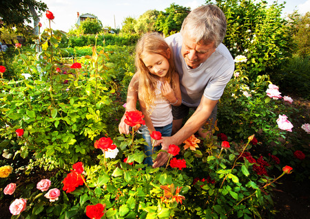 formal garden: Mature man with child caring for roses in the garden Stock Photo