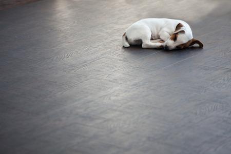 Puppy sleeping at warm floor. Dog Stockfoto